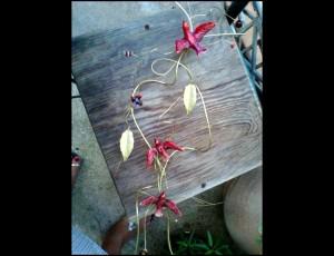 Σύρμα ορείχαλκος με κεραμικά πουλάκια 1